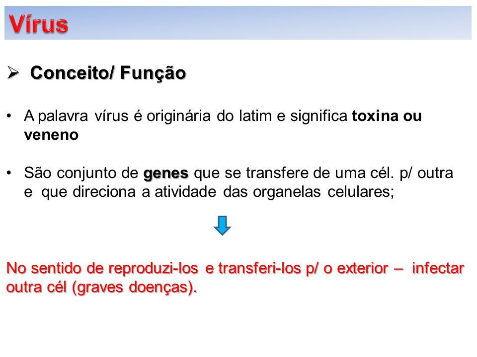 Vírus Conceito/ Função
