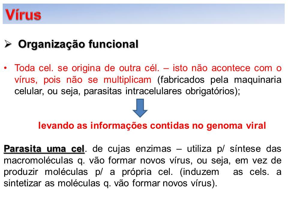 Vírus Organização funcional