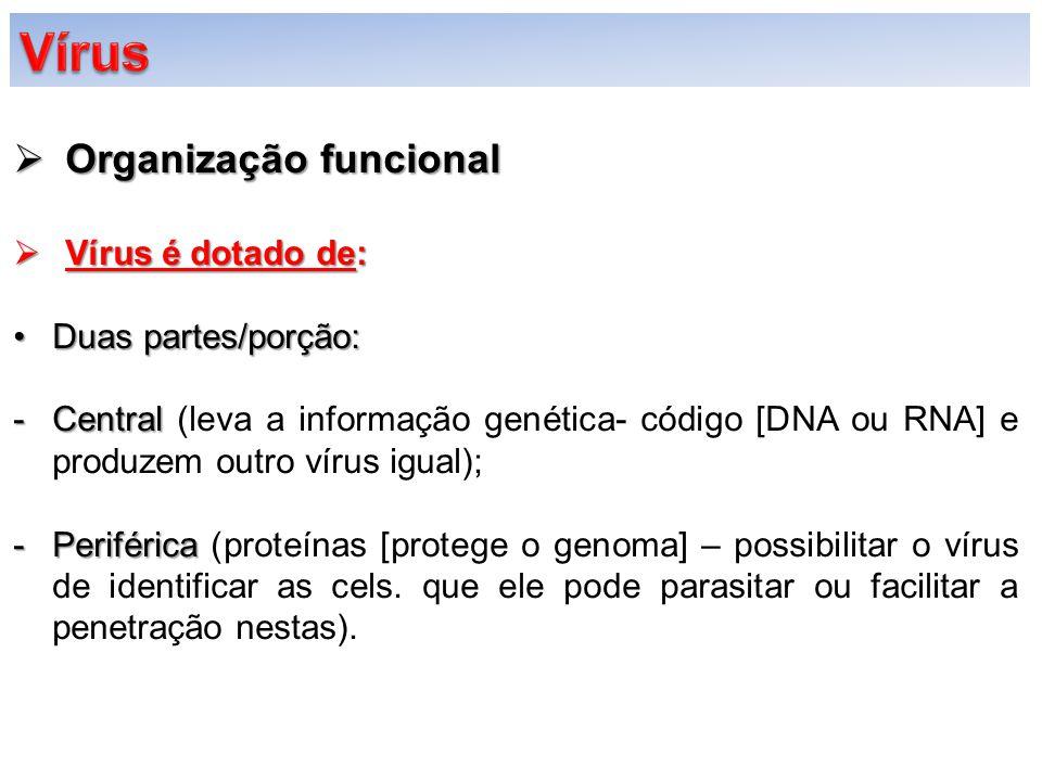 Vírus Organização funcional Vírus é dotado de: Duas partes/porção:
