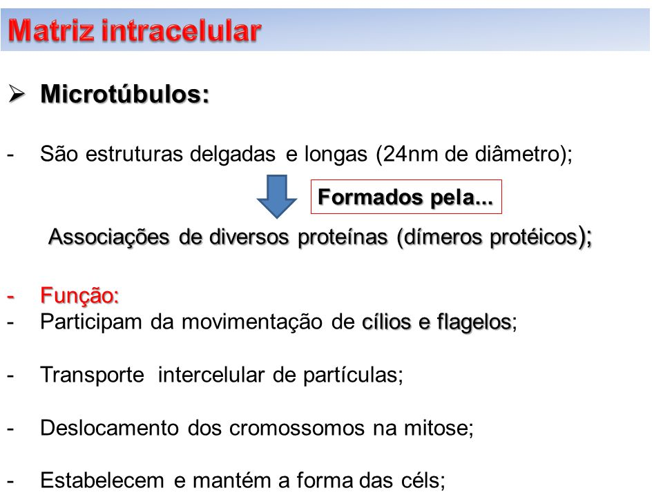 Matriz intracelular Microtúbulos: