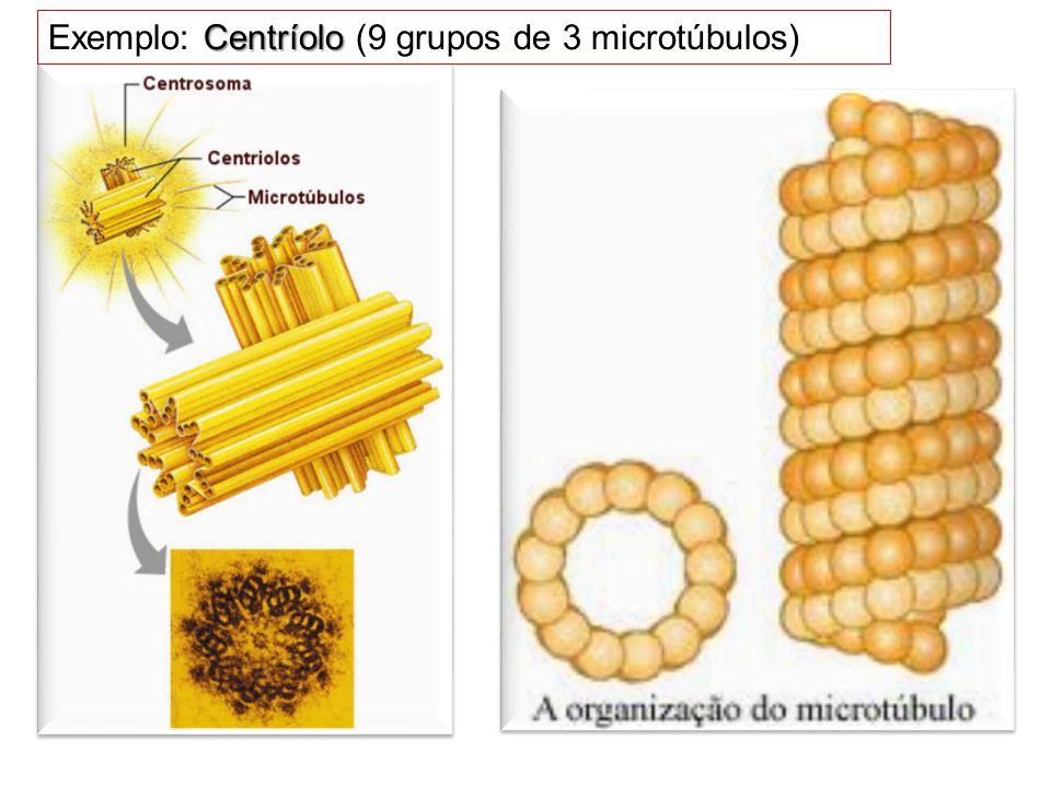 Exemplo: Centríolo (9 grupos de 3 microtúbulos)