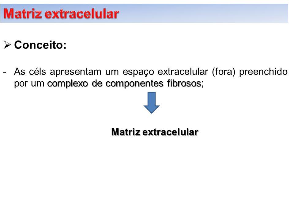 Matriz extracelular Conceito: