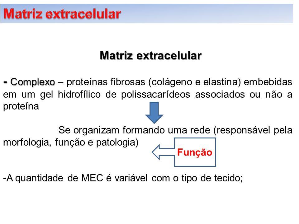 Matriz extracelular Matriz extracelular