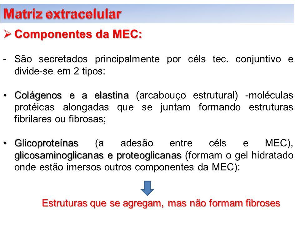 Matriz extracelular Componentes da MEC: