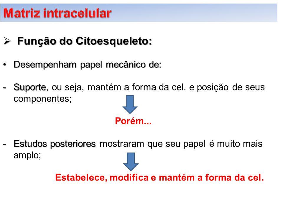 Matriz intracelular Função do Citoesqueleto: