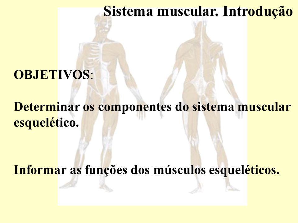 Sistema muscular. Introdução