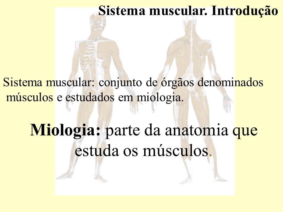 Miologia: parte da anatomia que estuda os músculos.