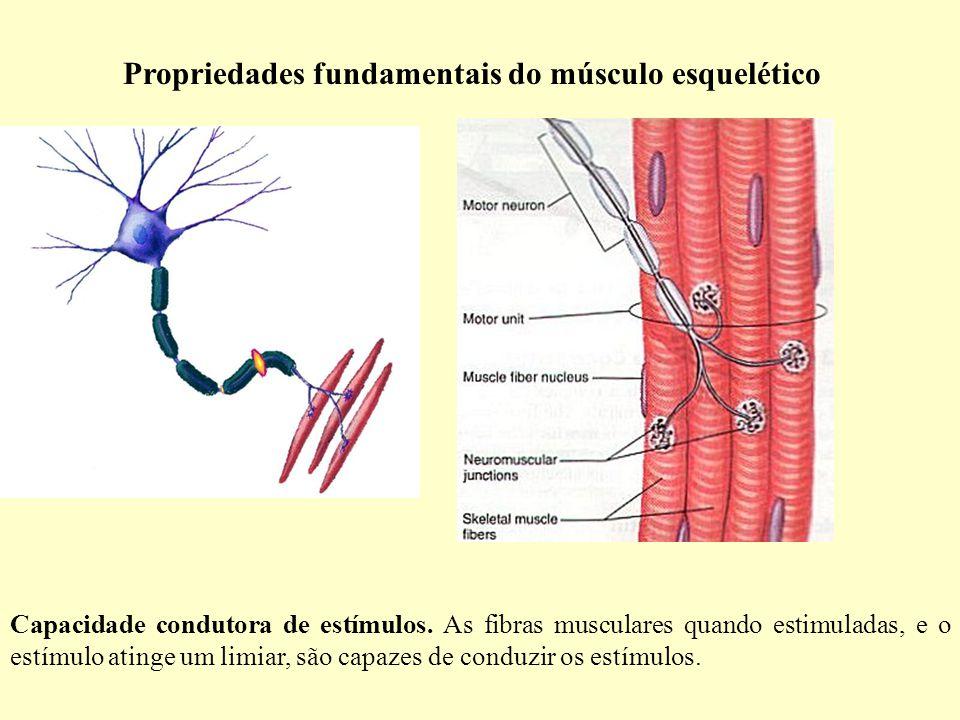 Propriedades fundamentais do músculo esquelético