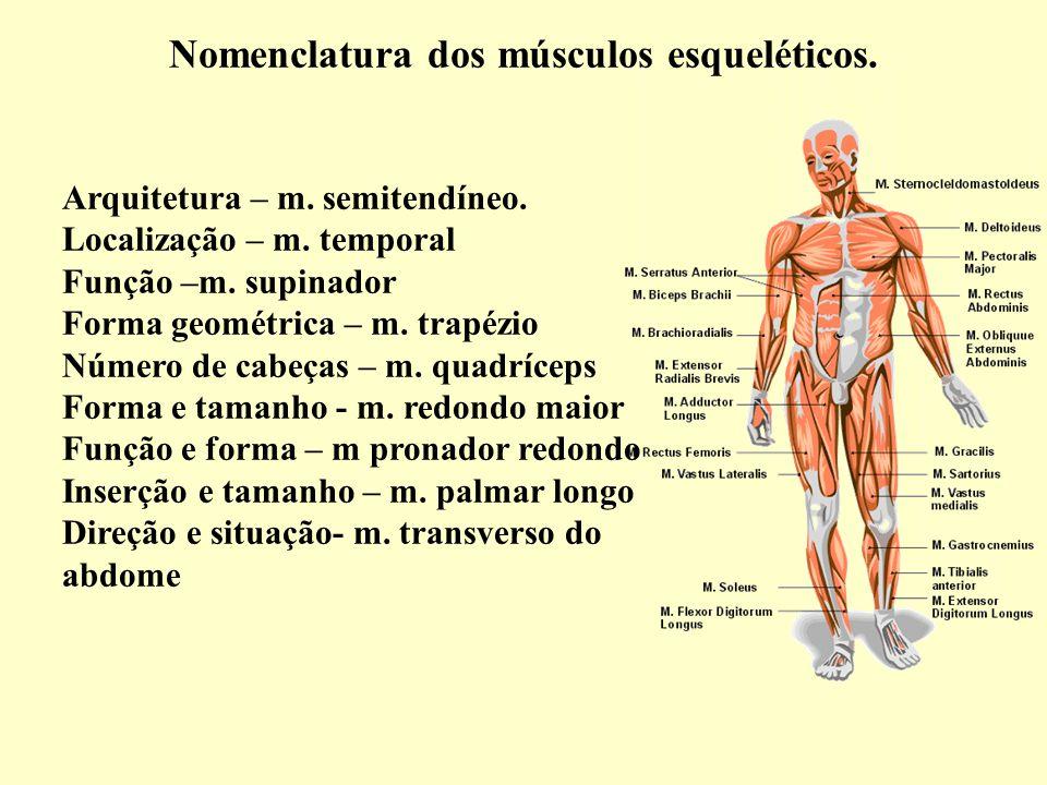Nomenclatura dos músculos esqueléticos.