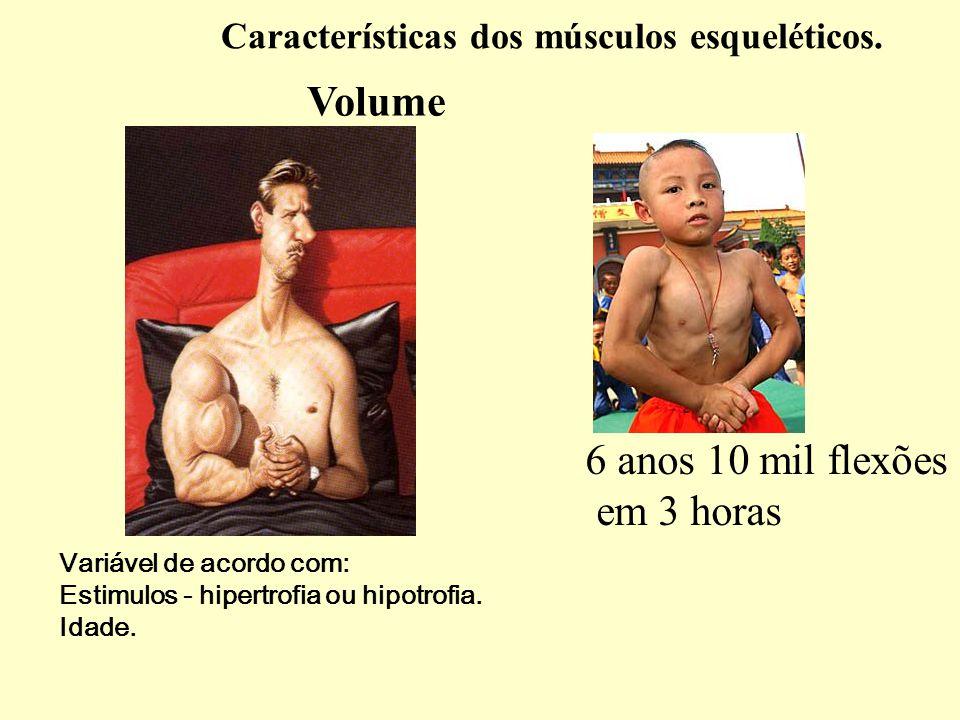 Características dos músculos esqueléticos.