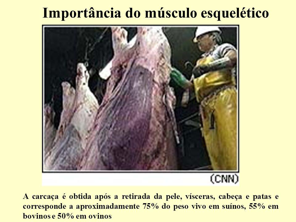 Importância do músculo esquelético