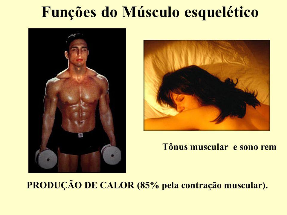 Funções do Músculo esquelético