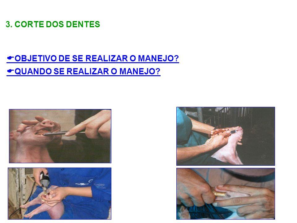 3. CORTE DOS DENTES OBJETIVO DE SE REALIZAR O MANEJO QUANDO SE REALIZAR O MANEJO