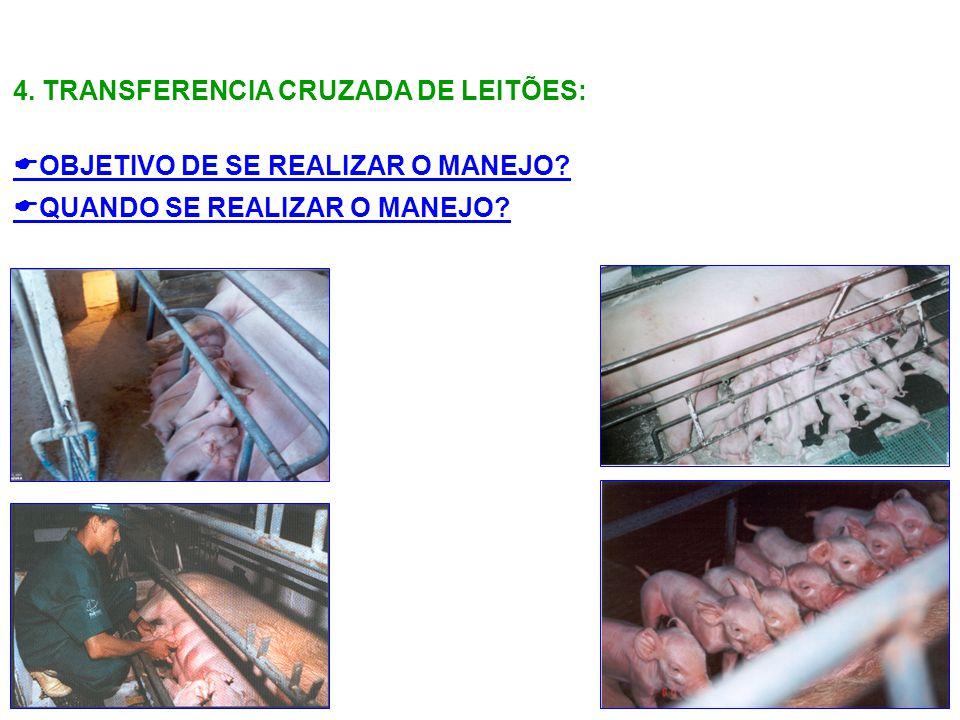 4. TRANSFERENCIA CRUZADA DE LEITÕES: