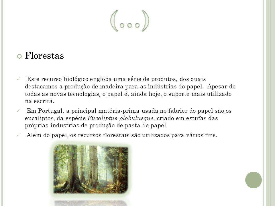 (…) Florestas.