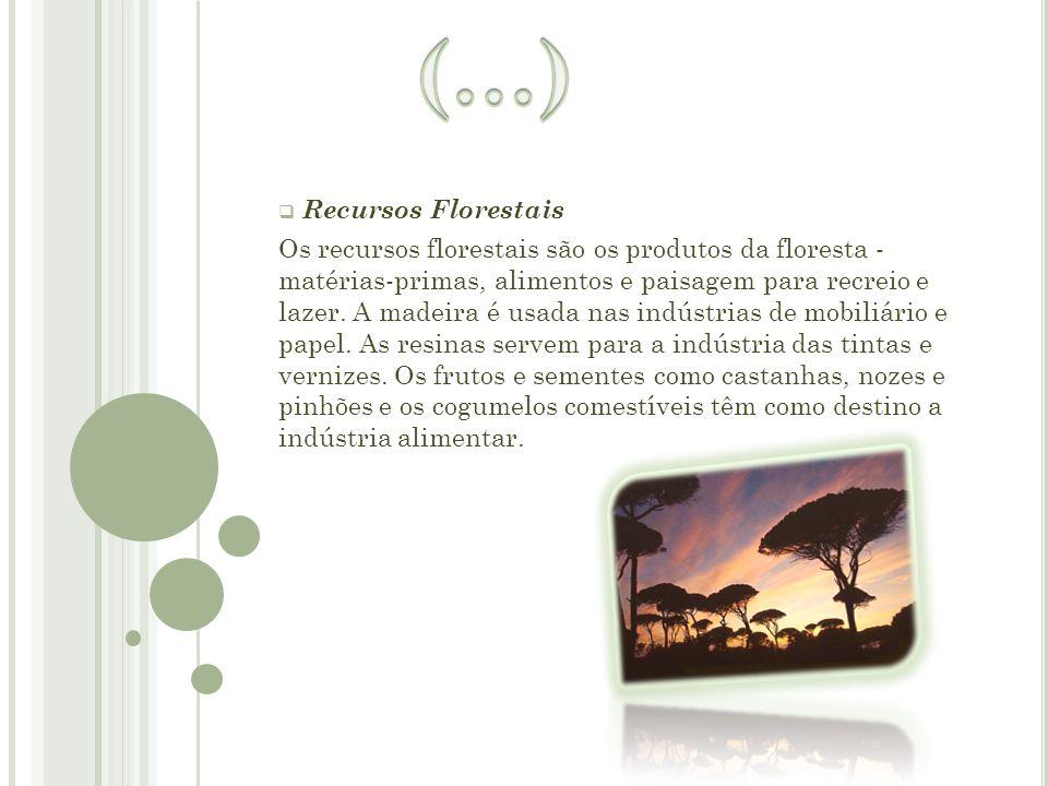 (…) Recursos Florestais