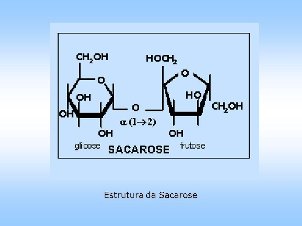Estrutura da Sacarose