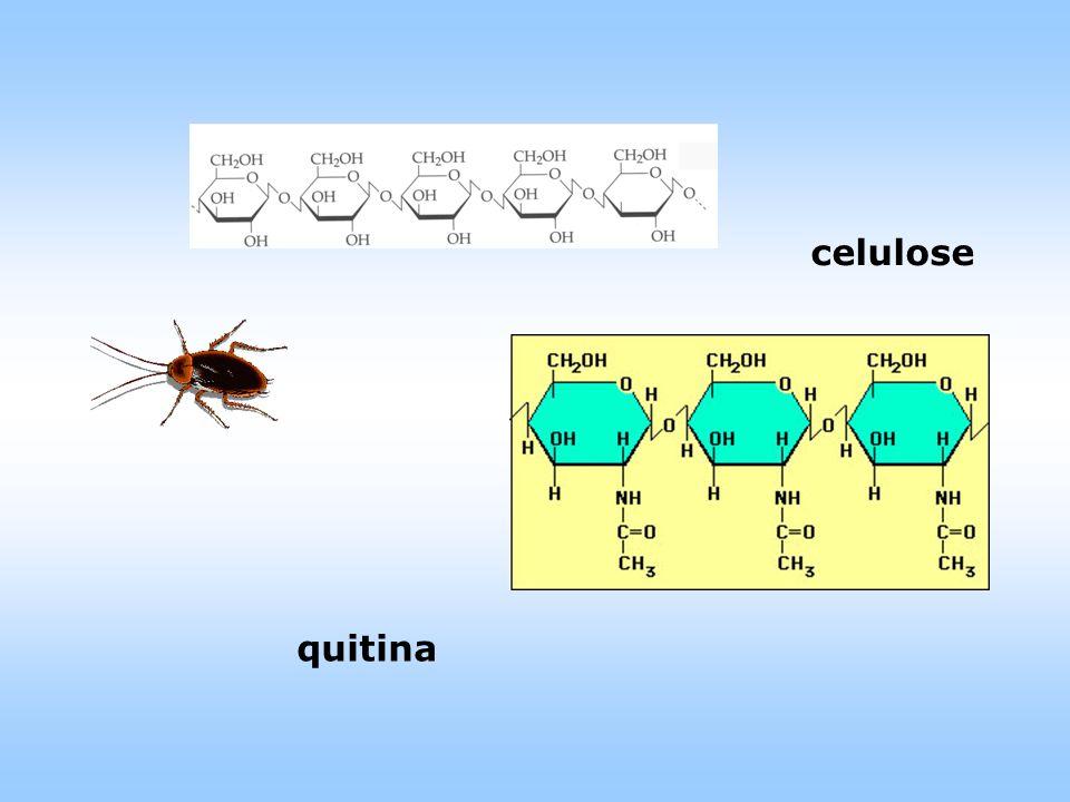 celulose quitina