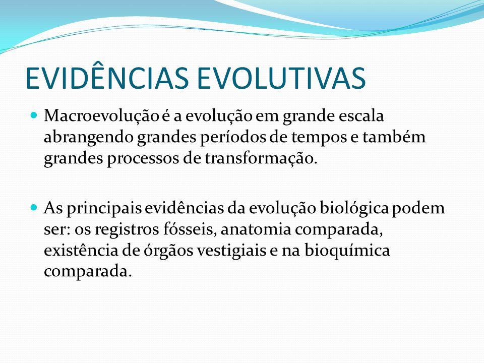 EVIDÊNCIAS EVOLUTIVAS