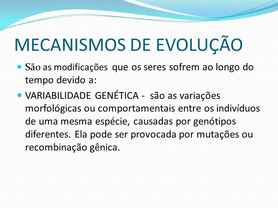 MECANISMOS DE EVOLUÇÃO