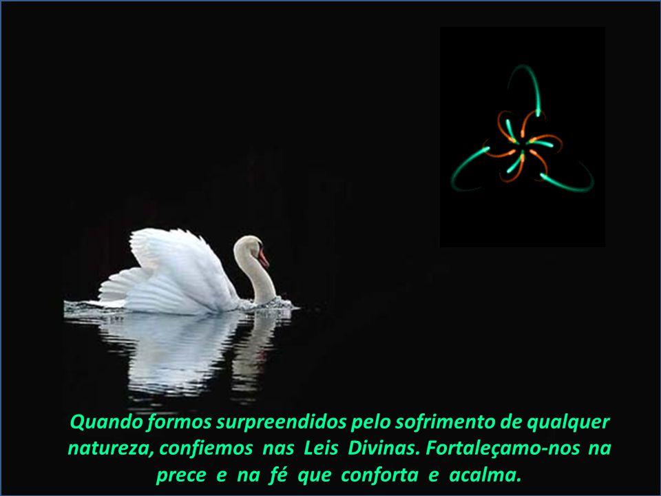 Quando formos surpreendidos pelo sofrimento de qualquer natureza, confiemos nas Leis Divinas.