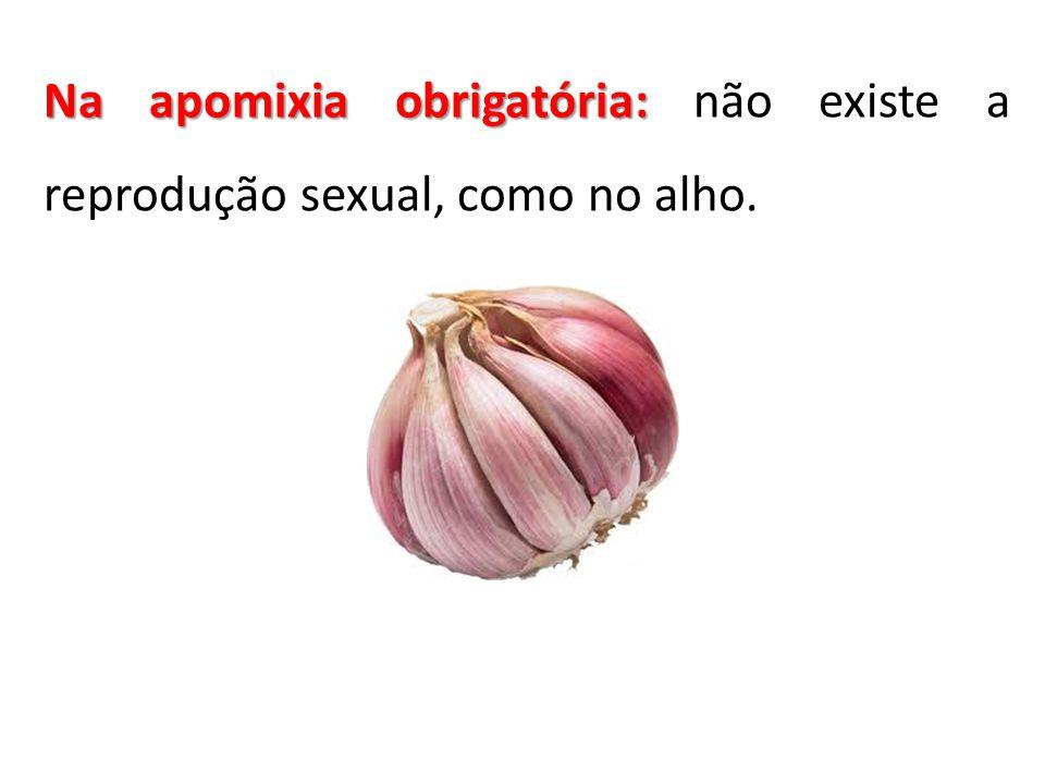 Na apomixia obrigatória: não existe a reprodução sexual, como no alho.