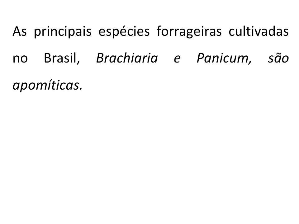 As principais espécies forrageiras cultivadas no Brasil, Brachiaria e Panicum, são apomíticas.