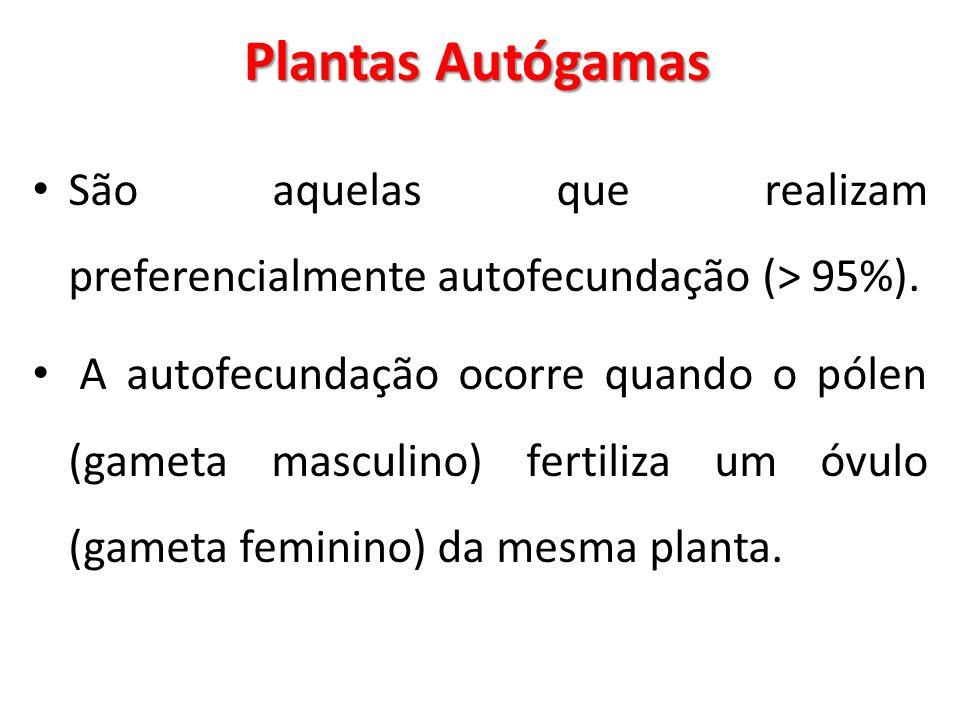 Plantas Autógamas São aquelas que realizam preferencialmente autofecundação (> 95%).