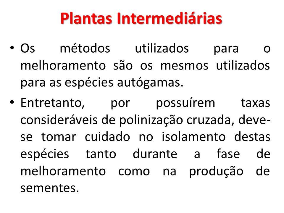 Plantas Intermediárias