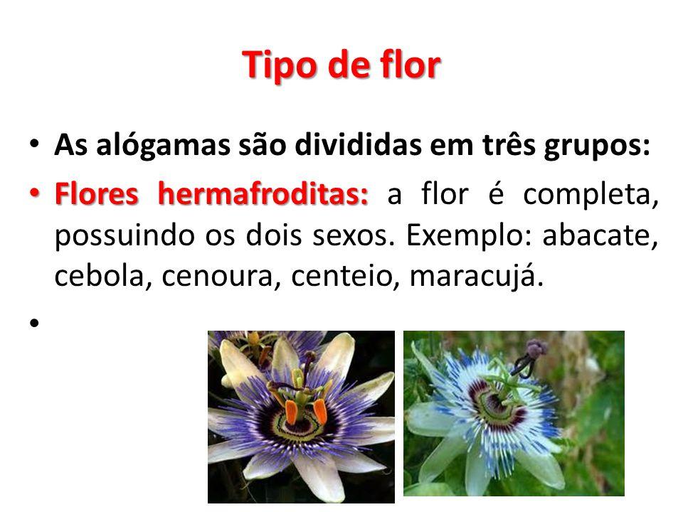 Tipo de flor As alógamas são divididas em três grupos: