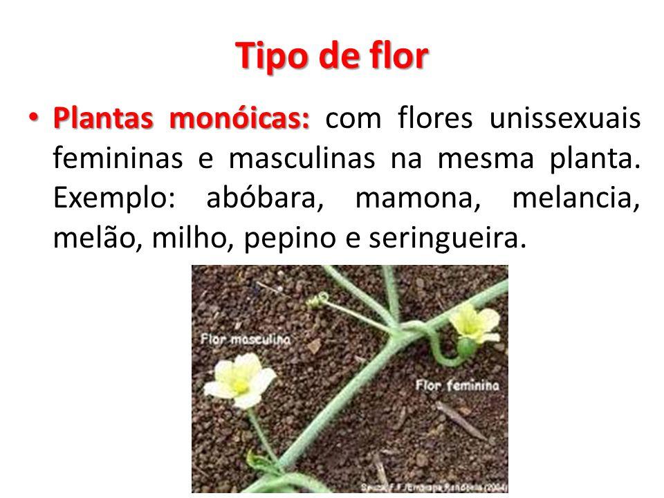 Tipo de flor