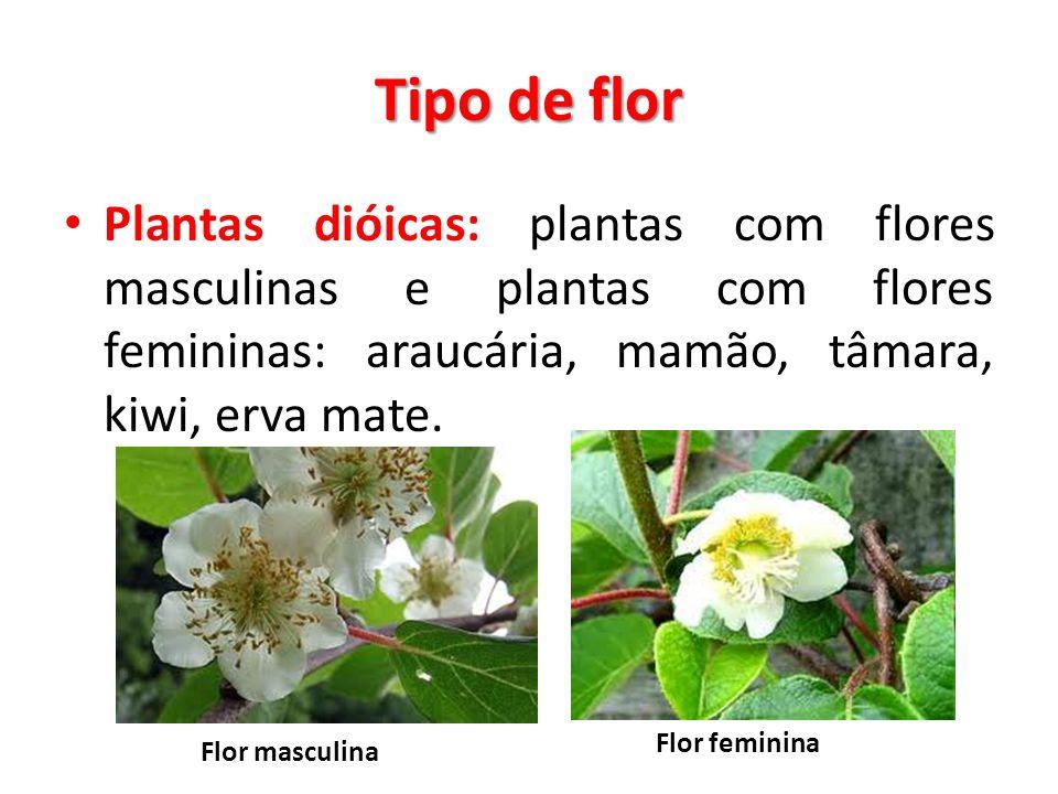 Tipo de flor Plantas dióicas: plantas com flores masculinas e plantas com flores femininas: araucária, mamão, tâmara, kiwi, erva mate.