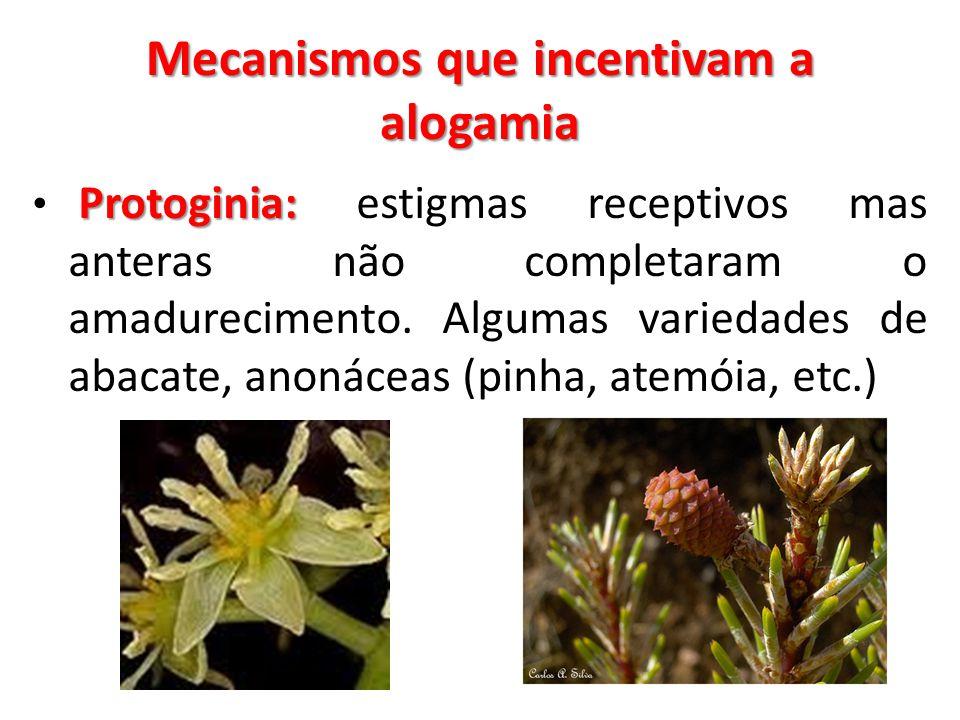 Mecanismos que incentivam a alogamia
