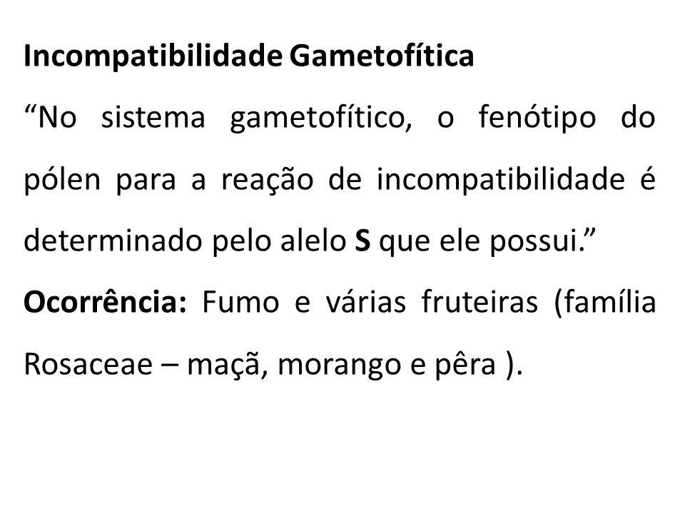 Incompatibilidade Gametofítica