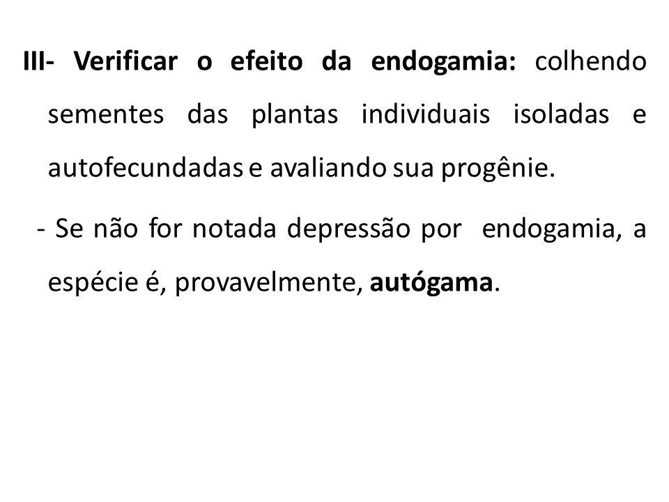 III- Verificar o efeito da endogamia: colhendo sementes das plantas individuais isoladas e autofecundadas e avaliando sua progênie.