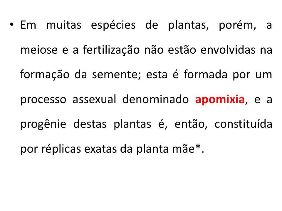 Em muitas espécies de plantas, porém, a meiose e a fertilização não estão envolvidas na formação da semente; esta é formada por um processo assexual denominado apomixia, e a progênie destas plantas é, então, constituída por réplicas exatas da planta mãe*.