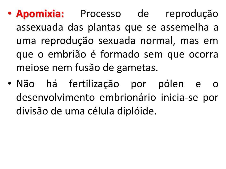 Apomixia: Processo de reprodução assexuada das plantas que se assemelha a uma reprodução sexuada normal, mas em que o embrião é formado sem que ocorra meiose nem fusão de gametas.