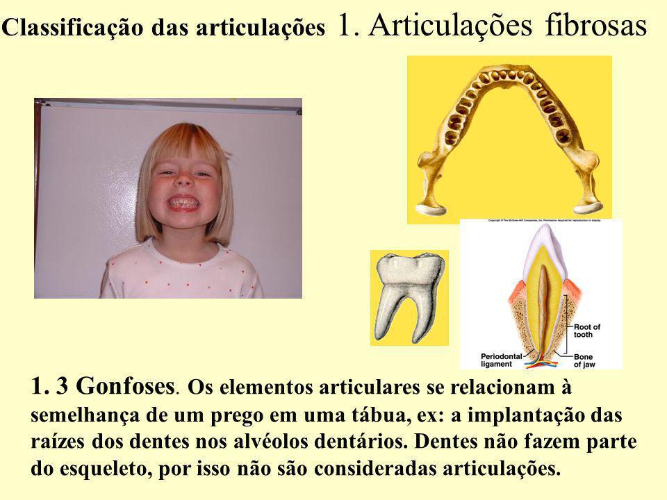 Classificação das articulações 1. Articulações fibrosas