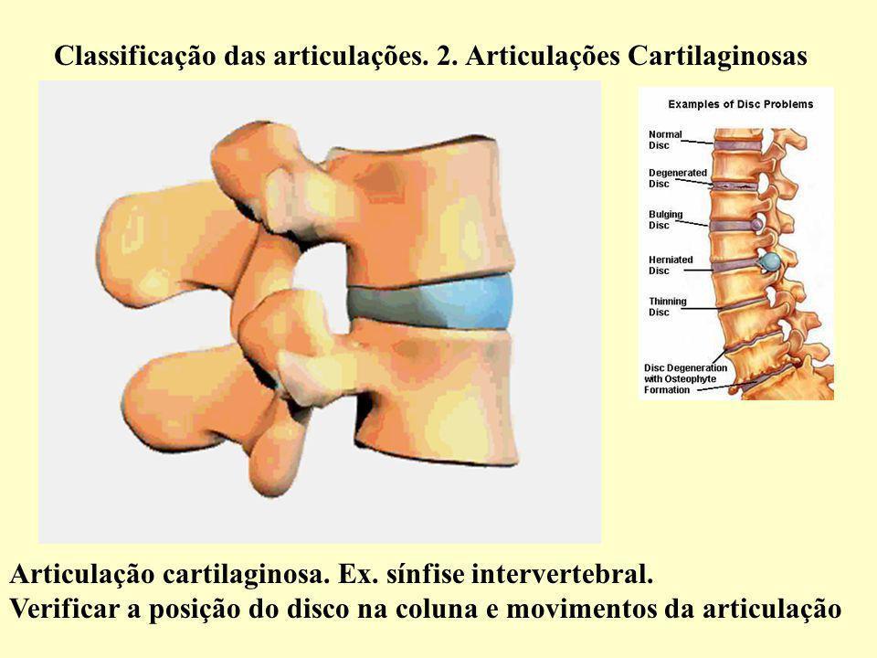 Classificação das articulações. 2. Articulações Cartilaginosas