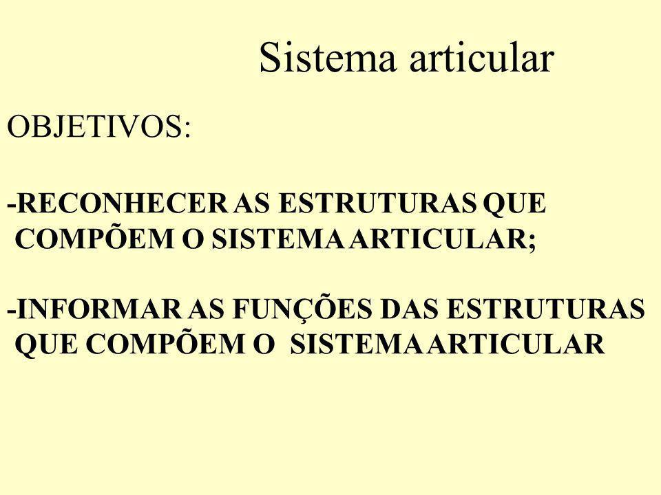 Sistema articular OBJETIVOS: -RECONHECER AS ESTRUTURAS QUE