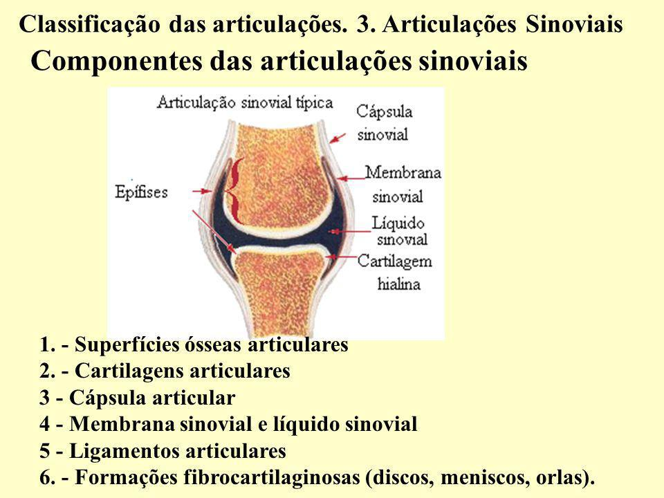 Classificação das articulações. 3. Articulações Sinoviais