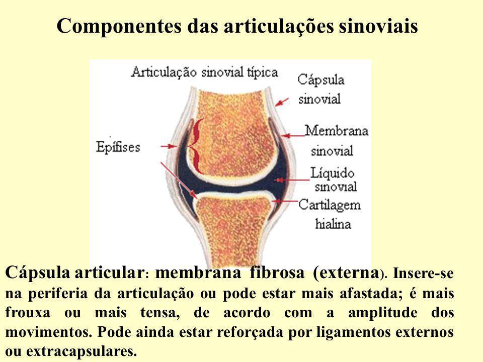 Componentes das articulações sinoviais