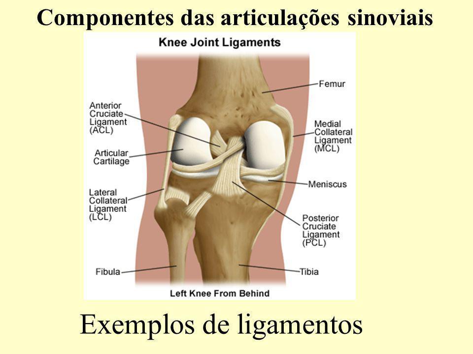 Exemplos de ligamentos