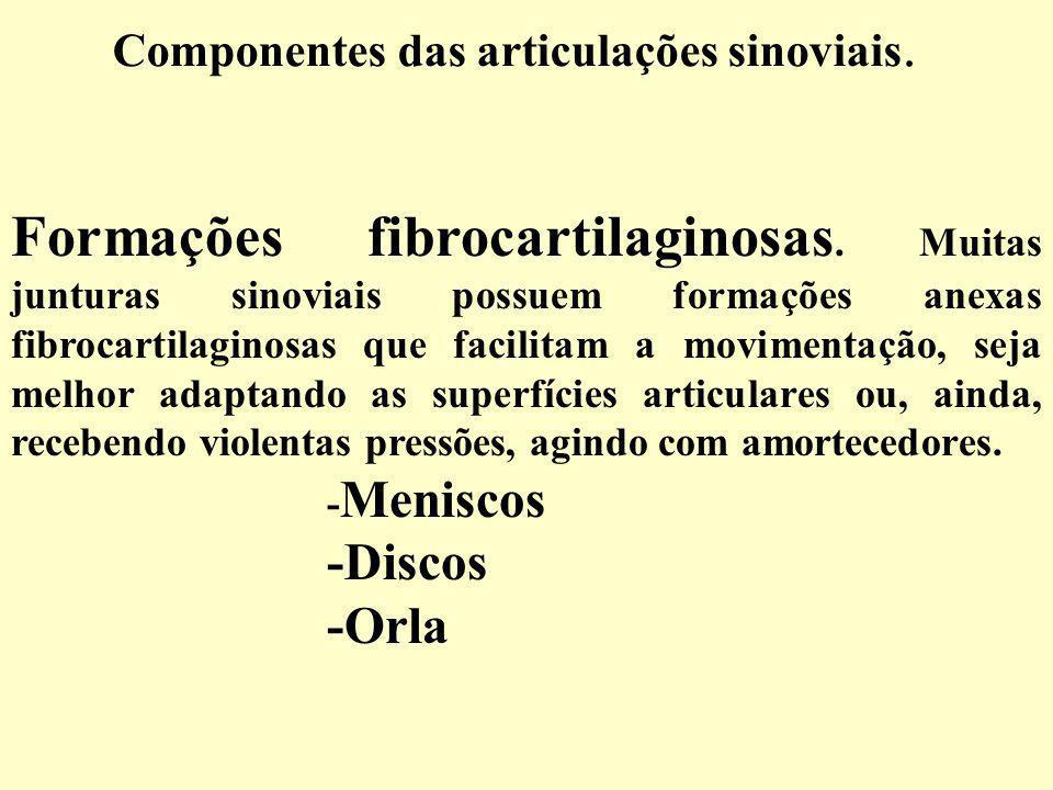 Componentes das articulações sinoviais.