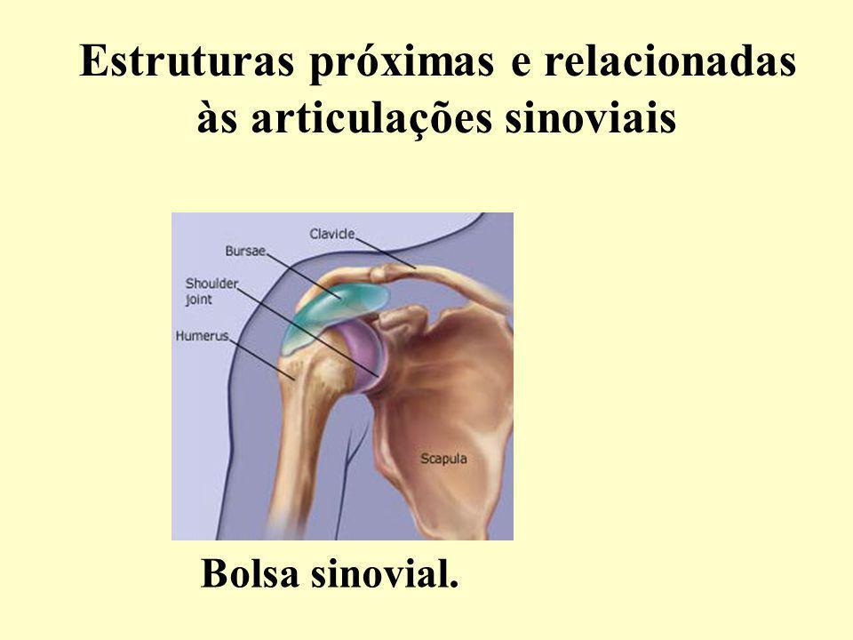 Estruturas próximas e relacionadas às articulações sinoviais