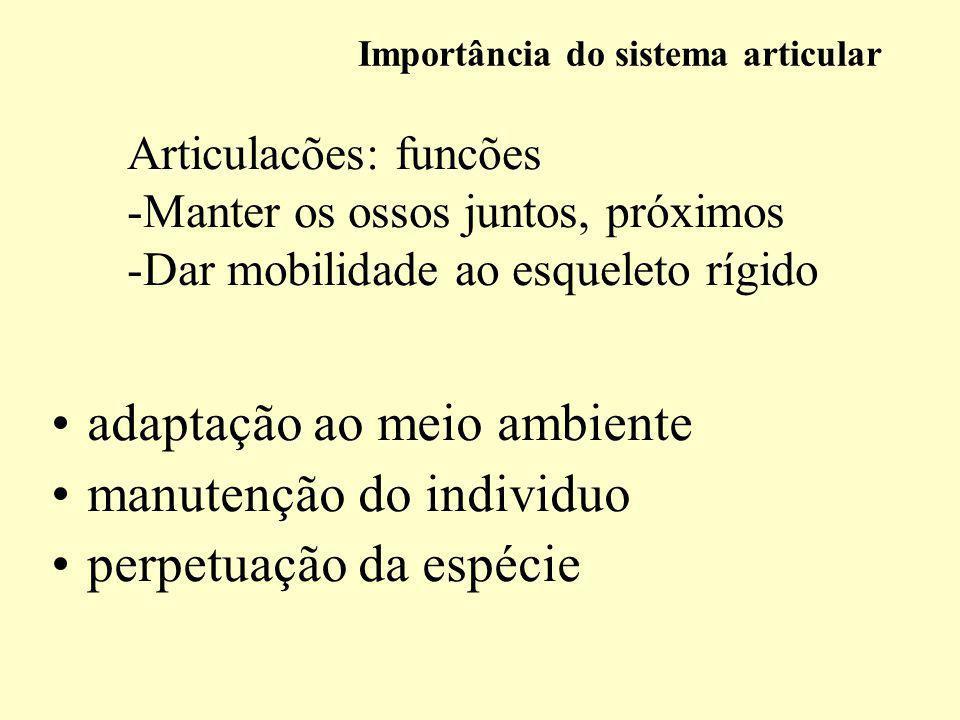 Importância do sistema articular