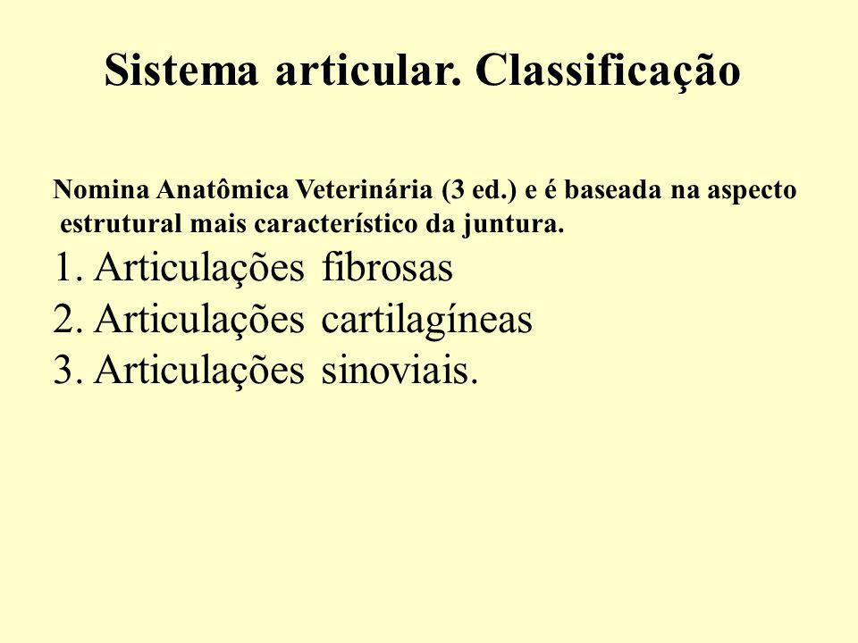 Sistema articular. Classificação