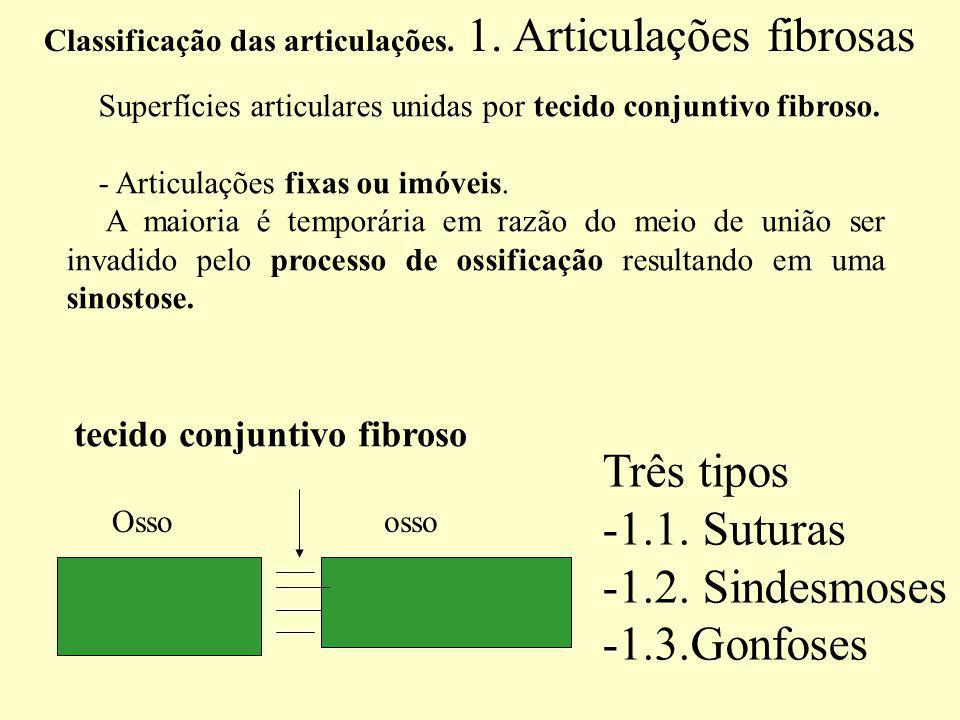 Três tipos 1.1. Suturas 1.2. Sindesmoses 1.3.Gonfoses