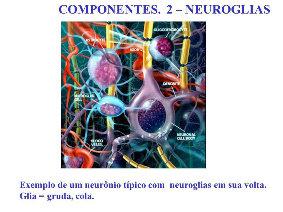 COMPONENTES. 2 – NEUROGLIAS