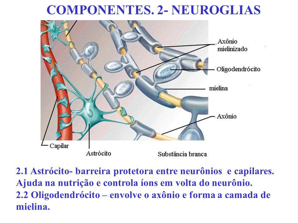 COMPONENTES. 2- NEUROGLIAS